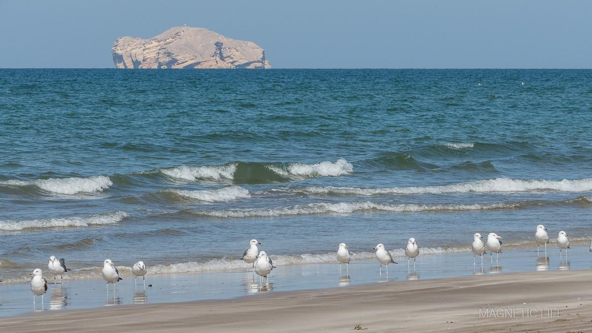 Muscat atrakcje turystyczne Qurum Beach