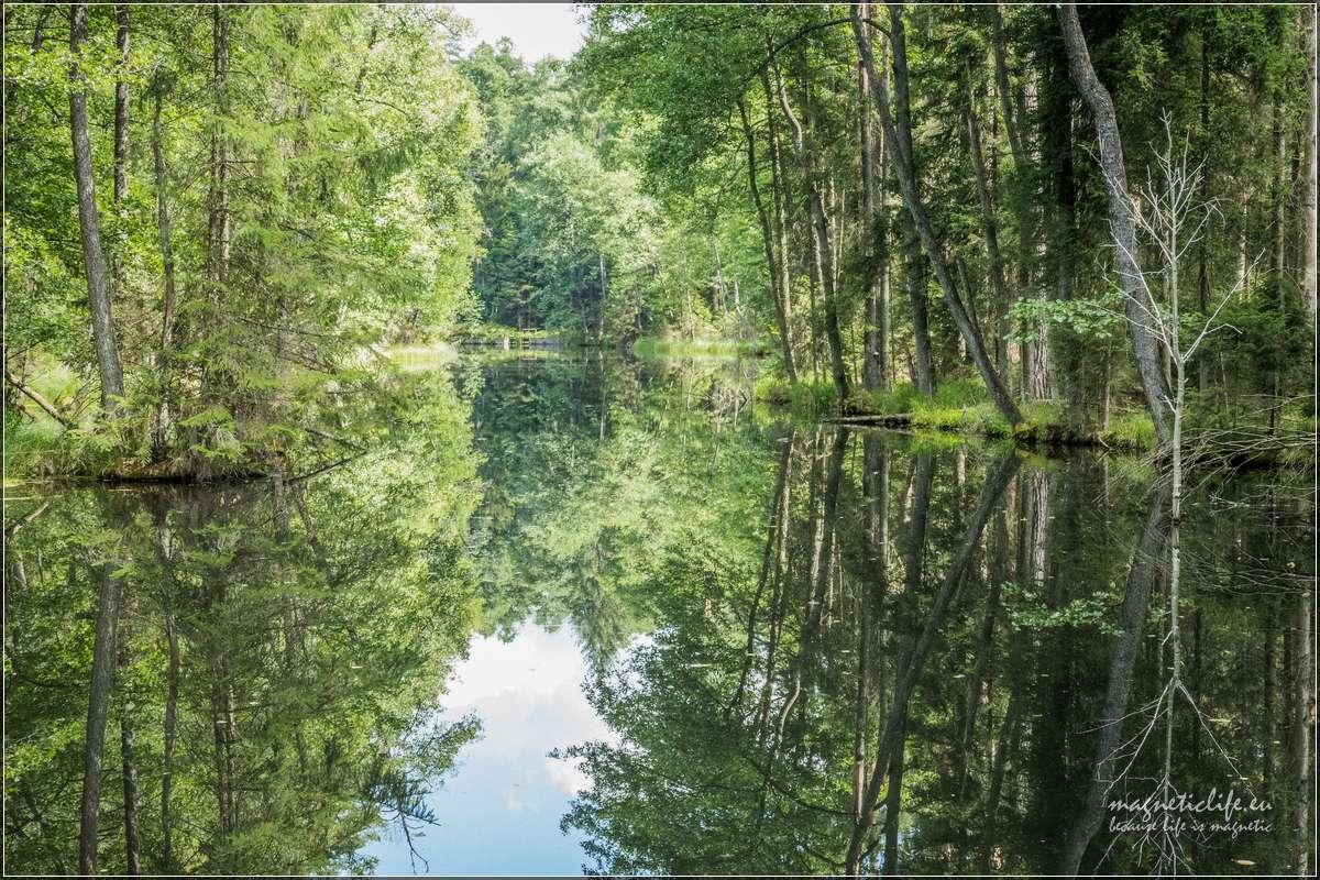 leśne uroczysko przy trasie Green Velo