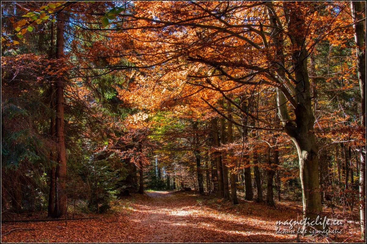 Jesienna droga naPotrójną