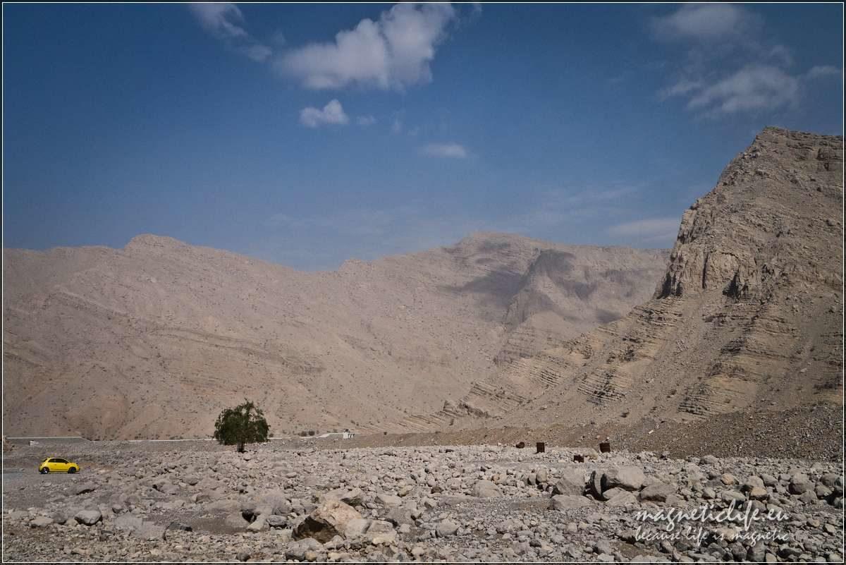 Ostatnie drzewo Wadi Ghalilah