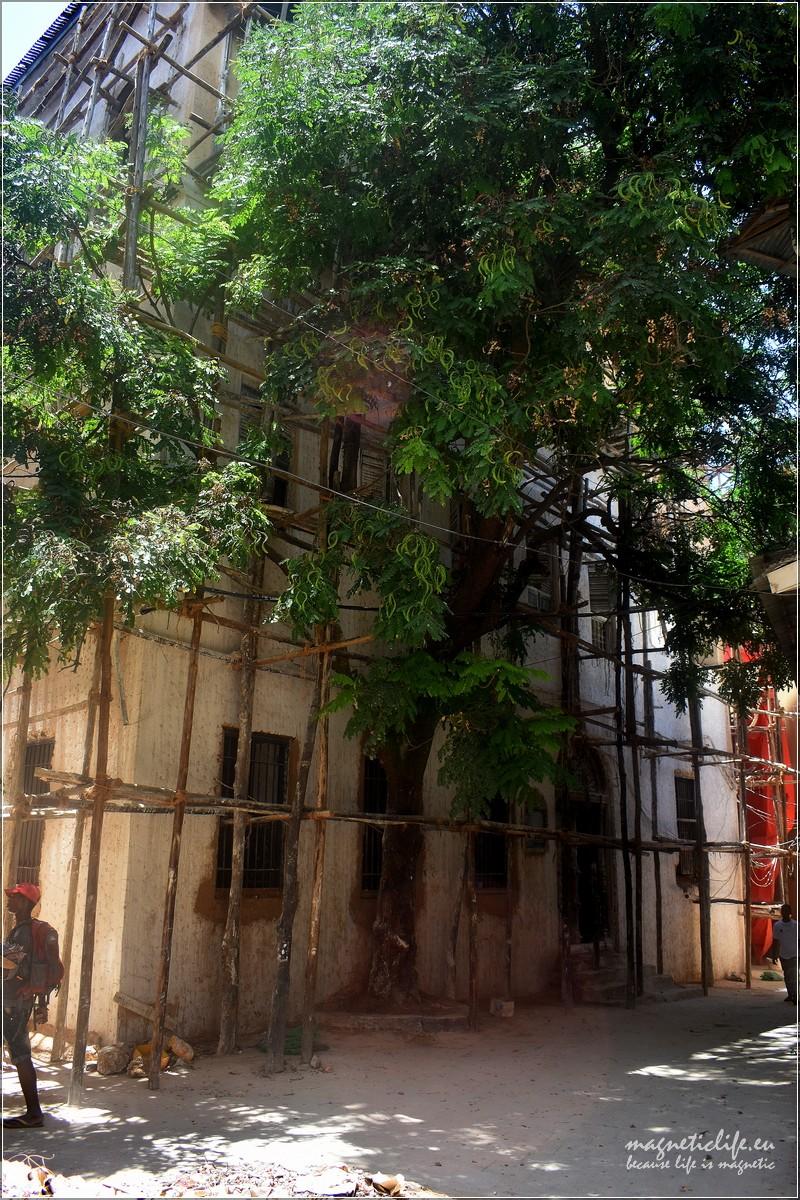 Dom Tippu Tipa się wali