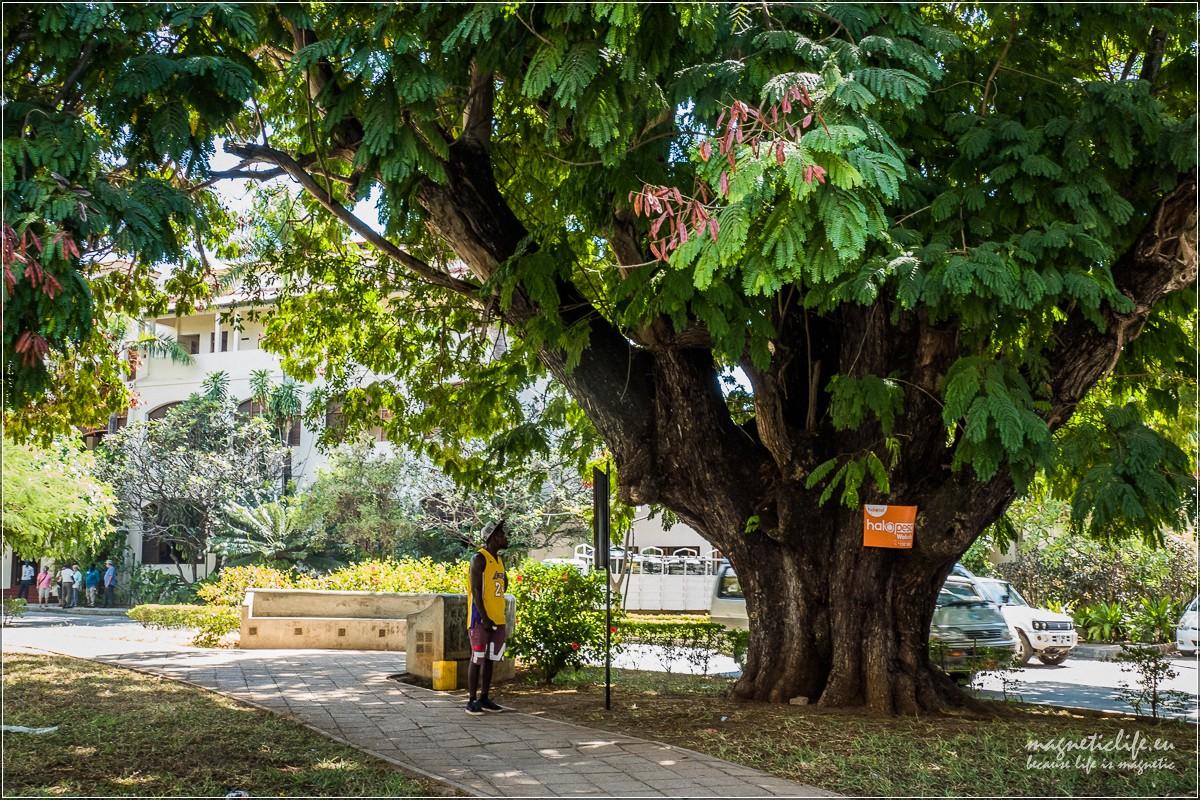 Freddie Mercury iStone Town Zanzibar Wielkie drzewo