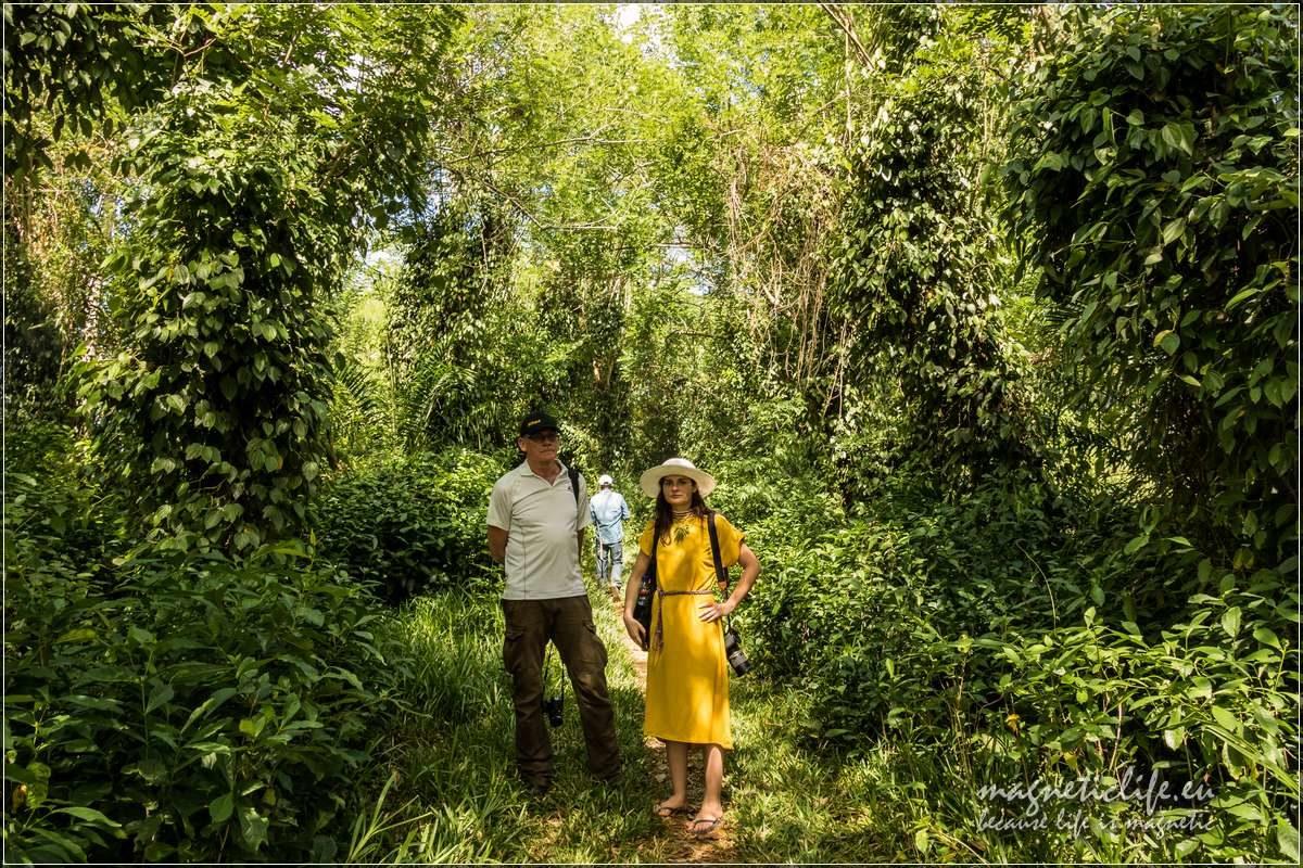 Kizimbani farma przypraw naZanzibarze. Zwiedzamy