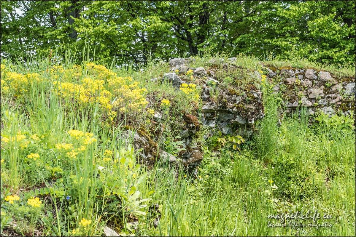 Mury obronne porastają kwiaty