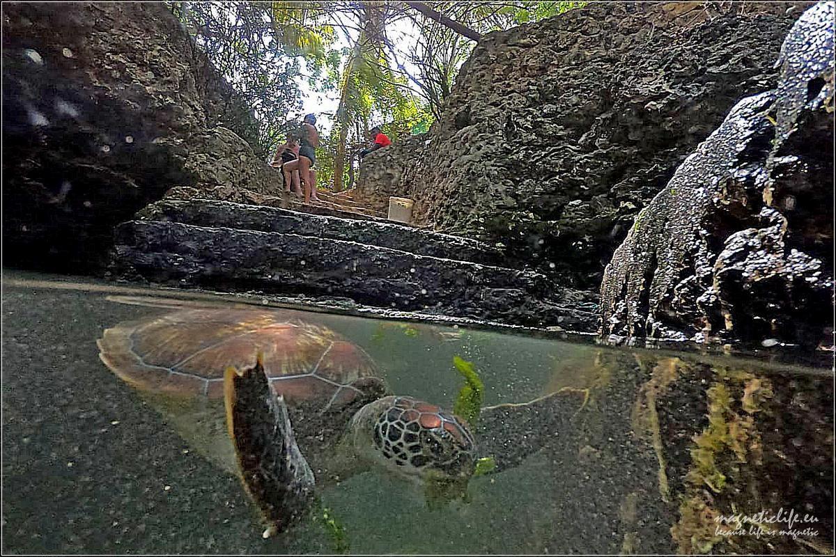 Obiad żółwia