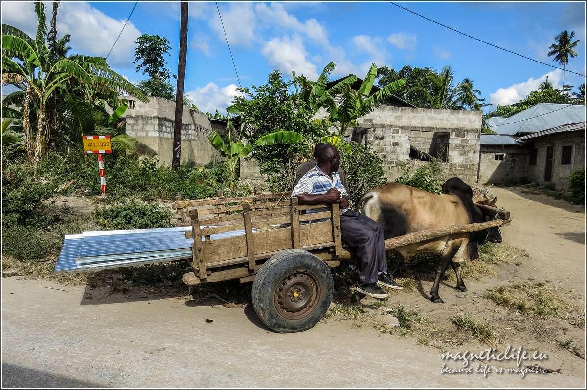Popularny środek transportu namałe odległości