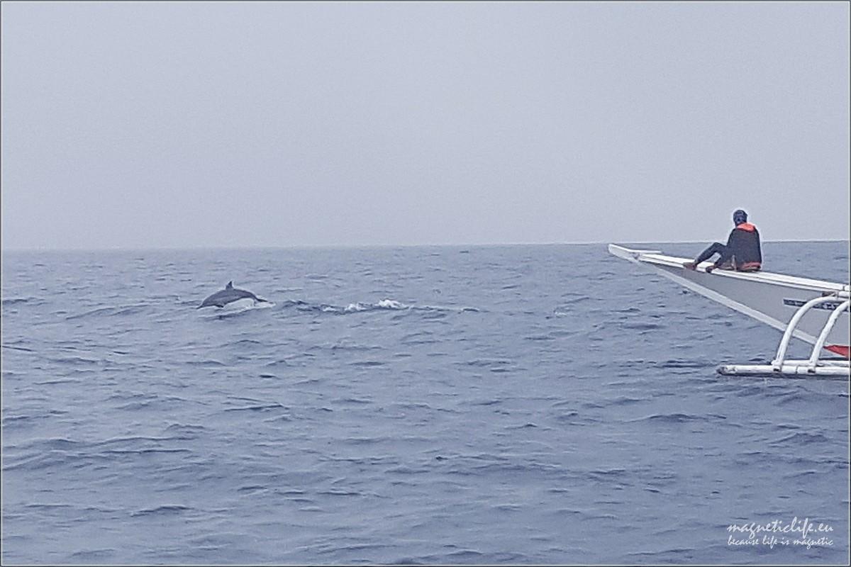 Island Hopping skaczący delfin