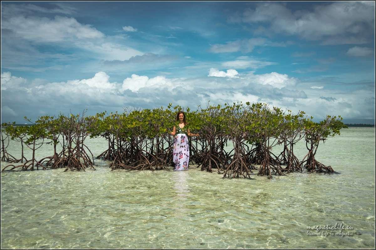 Virgin Island drzewa namorzynowe