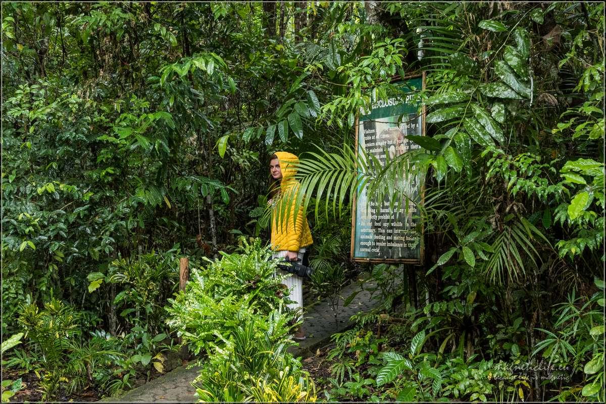 Bohol dżungla zwyrakami