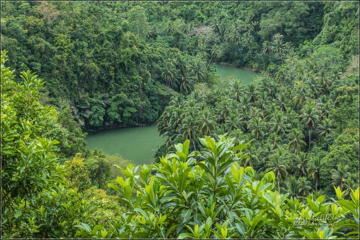 Loboc rzeka wdżungli